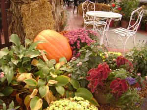 garden with pumpkin