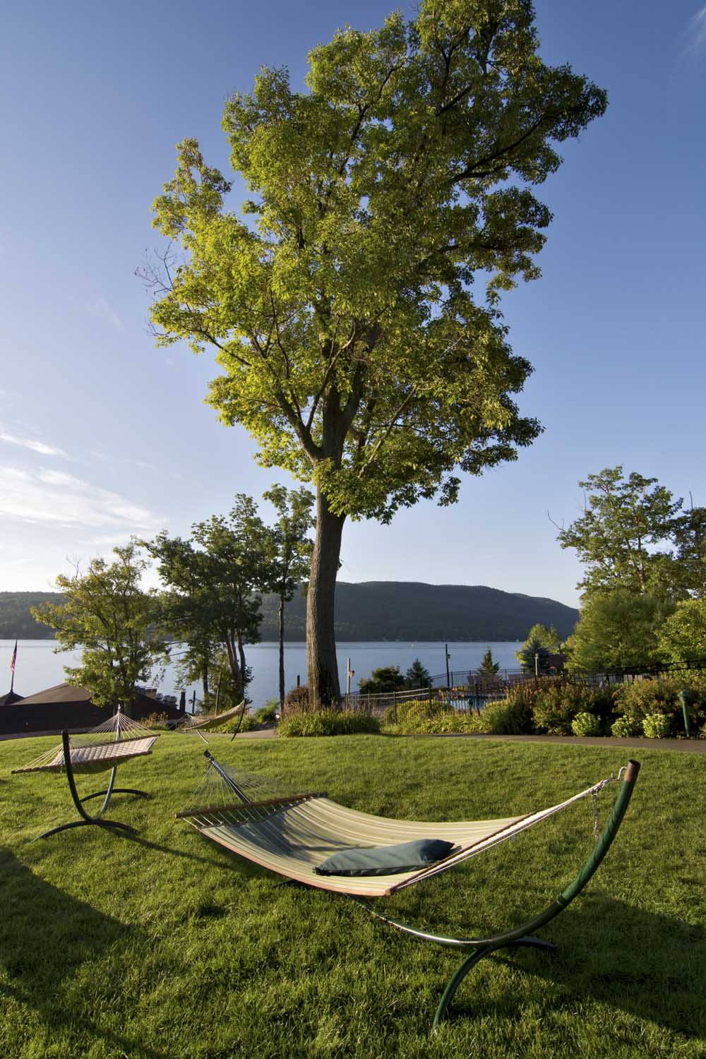 Grass area with Tree overlooking Lake George