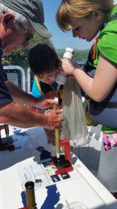 transferring plankton to the tray